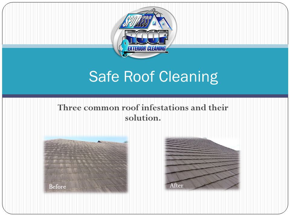 The first common roof Infestation There's a type of ugly algae that thrives in humid areas like Florida.