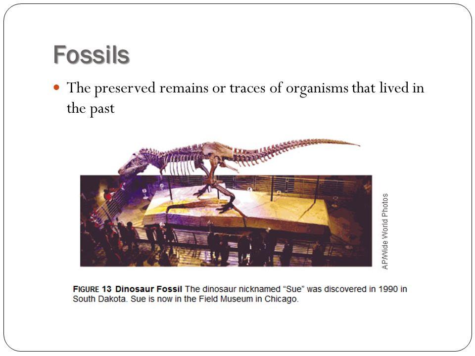 How Do Fossils Form.