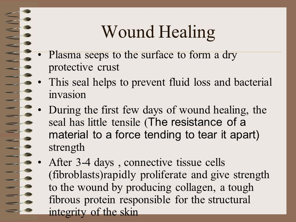 Wound Healing At the same time small blood vessels regenerate and build new blood channels, granulation tissue (fibrous connective tissue) includes blood vessels and lymphatics that proliferate from the base of the wound Rapidly growing and multiple epithelial cells begin to restore the epithelial continuity of the skin At this stage the wound appears healed, healing is not complete until the granulation tissue organizes into scar tissue