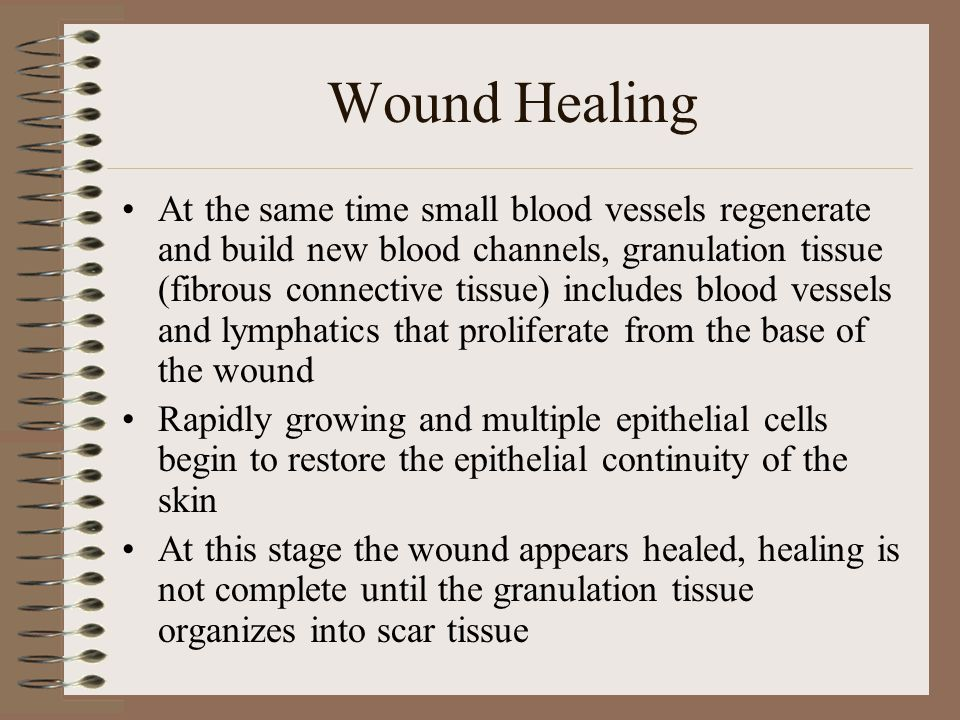 Wound Healing By the ninth or tenth day, the wound is moderately well healed and then becomes progressively stronger The whole process of repair takes 2 weeks or more depending on factors such as physical condition of the patient, size and location of the wound, and stresses put on the incisional area During this time the scar (cicatrix) strengthens as the connective tissue shrinks