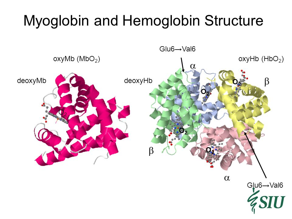 Hemoglobin Structure Changes http://www.mfi.ku.dk/PPaulev/chapter8/images/8-3.jpg