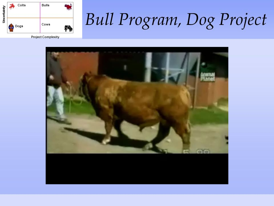 Bull Program, Dog Project Project Complexity Uncertainty Dogs Cows BullsColts