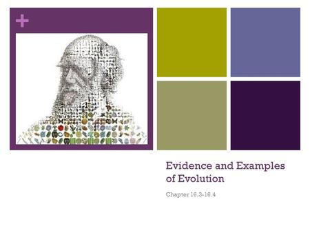 + Evidence and Examples of Evolution Chapter 16.3-16.4.