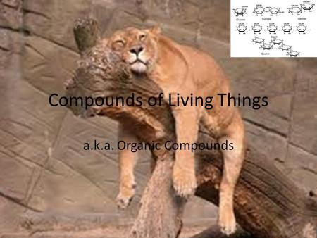 Compounds of Living Things a.k.a. Organic Compounds.