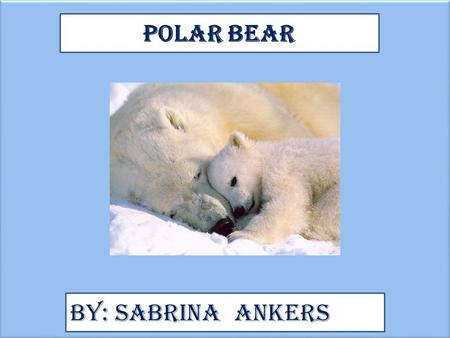 Polar Bear By: Sabrina Ankers. Animal Facts Description A Polar Bears Colors are White and brown. The Height and length Is 7.25 to 8 ft 2.2 To 2.5 m A.