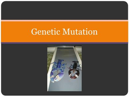 Genetic Mutation. Mutation Greatest source of genetic diversity A change in the sequence of nucleotides of a gene. Some changes to the DNA will alter.