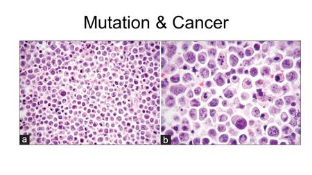 Mutation & Cancer. Tumours & Mitosis Tumours – abnormal groups of cells that develop at any stage of life in any part of the body.