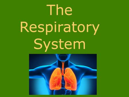 The Respiratory System. Respiratory system: moves oxygen into the body & removes carbon dioxide produced as wastes.