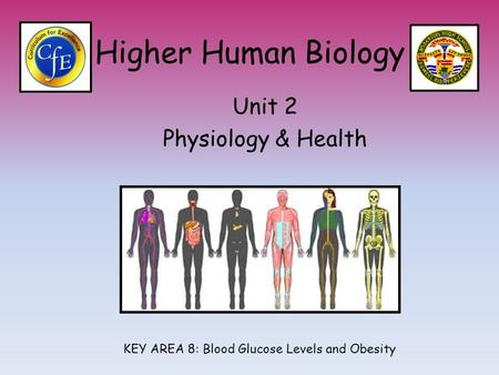 Higher Human Biology Unit 2 Physiology & Health KEY AREA 8: Blood Glucose Levels and Obesity.