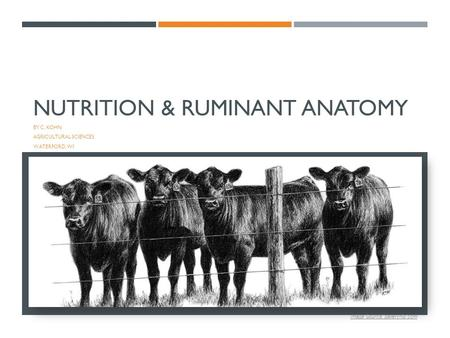 NUTRITION & RUMINANT ANATOMY BY C. KOHN AGRICULTURAL SCIENCES WATERFORD, WI 1 Image Source: galleryhip.com.