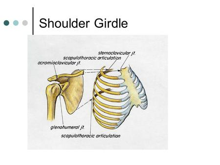 Shoulder Girdle. Shoulder Complex is the most mobile joint in the body. Scapula Clavicle Sternum Humerus Rib cage/Thorax.