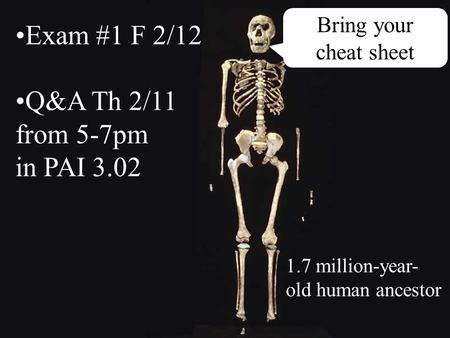 Bring your cheat sheet Exam #1 F 2/12 Q&A Th 2/11 from 5-7pm in PAI 3.02 1.7 million-year- old human ancestor.
