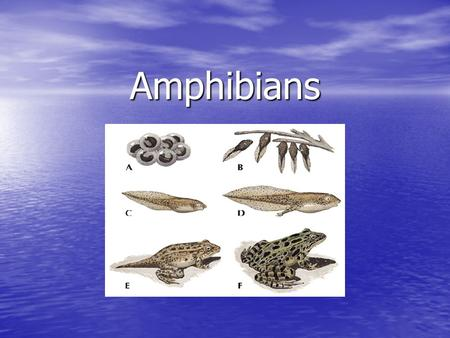 Amphibians. Vertebrates are… Animals that have a backbone or vertebral column. Animals that have a backbone or vertebral column.