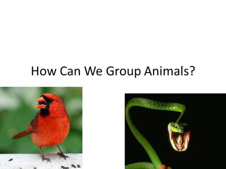 How Can We Group Animals?