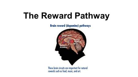 The Reward Pathway.