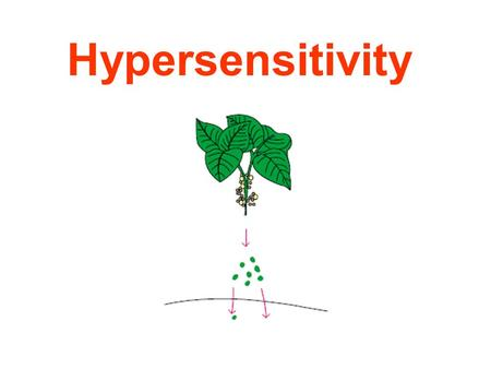 Hypersensitivity. Ag Immune response Eliminate Ag Tissue injury, function deviation Hypersensitivity.