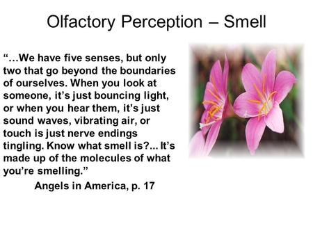 "Olfactory Perception – Smell ""…We have five senses, but only two that go beyond the boundaries of ourselves. When you look at someone, it's just bouncing."