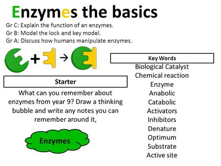 Enzymes the basics Gr C: Explain the function of an enzymes. Gr B: Model the lock and key model. Gr A: Discuss how humans manipulate enzymes. Key Words.