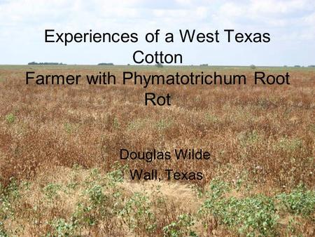 Experiences of a West Texas Cotton Farmer with Phymatotrichum Root Rot Douglas Wilde Wall, Texas.
