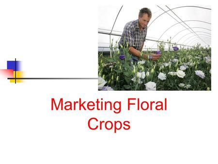 Marketing Floral Crops. Next Generation Science / Common Core Standards Addressed! CCSS. ELA Literacy. WHST.11 ‐ 12.4 Produce clear and coherent writing.