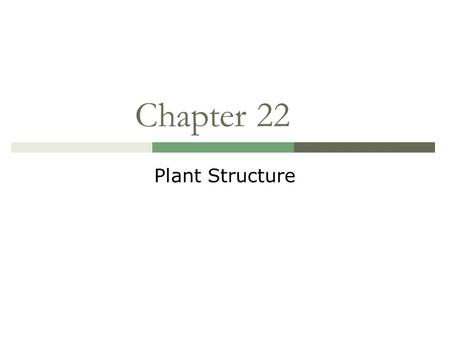 Chapter 22 Plant Structure. Leaf Structure  A leaf is a plant's principal organ of photosynthesis, the process by which sunlight is used to form foods.
