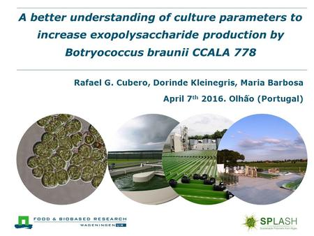 A better understanding of culture parameters to increase exopolysaccharide production by Botryococcus braunii CCALA 778 Rafael G. Cubero, Dorinde Kleinegris,