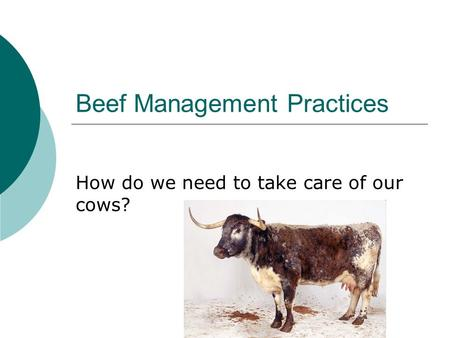 Beef Management Practices How do we need to take care of our cows?
