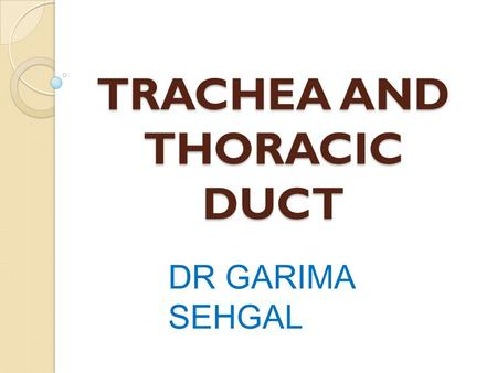 TRACHEA AND THORACIC DUCT DR GARIMA SEHGAL. TRACHEA.