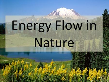 Energy Flow in Nature. All organisms need energy to live. Organisms can be divided into three main groups – producers, consumers, and decomposers – based.