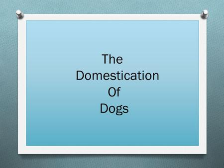 The Domestication Of Dogs. Quick facts about dogs  They were likely to be the first animals domesticated.  They have been mans best friend for around.