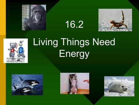 16.2 Living Things Need Energy. List some foods you had for dinner last night. What is the organism that was the source for the food.