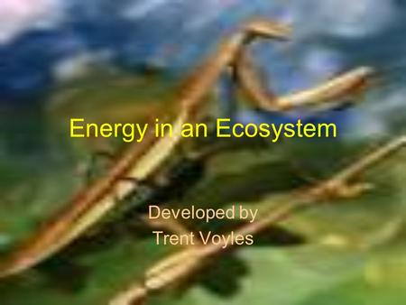 Energy in an Ecosystem Developed by Trent Voyles.