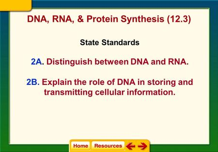 DNA, RNA, & Protein Synthesis (12.3) State Standards 2A. Distinguish between DNA and RNA. 2B. Explain the role of DNA in storing and transmitting cellular.