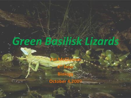 Green Basilisk Lizards Pat McGlasson 4 th hour Biology October 4,2009.