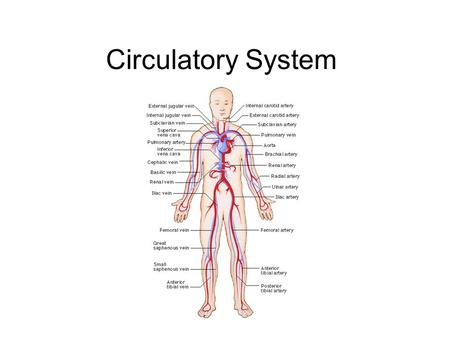 Circulatory System. Functions of the Circulatory System Blood carries oxygen and nutrients to the cells in the body Blood picks up carbon dioxide and.