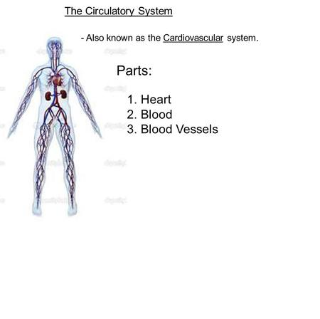 The Circulatory System - Also known as the Cardiovascular system. Parts: 1. Heart 2. Blood 3. Blood Vessels.
