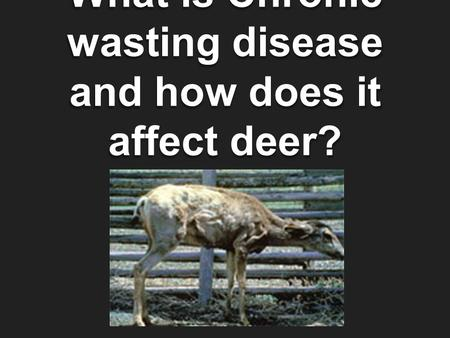 What is Chronic wasting disease and how does it affect deer?