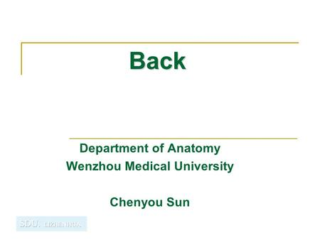 Back Department of Anatomy Wenzhou Medical University Chenyou Sun.