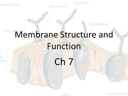 Membrane Structure and Function Ch 7. Cell Membrane  Aka: Plasma membrane, phosopholipid.