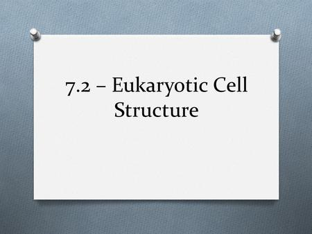 7.2 – Eukaryotic Cell Structure. Cell Boundary (Animal & Plant) O Cell Membrane O Function: O Controls what enters or exits the cell O Semipermeable –