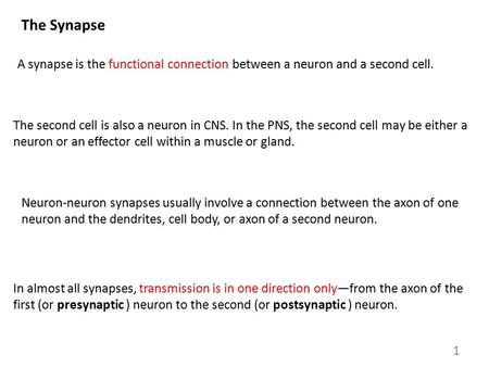 The Synapse A synapse is the functional connection between a neuron and a second cell. The second cell is also a neuron in CNS. In the PNS, the second.