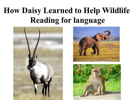 How Daisy Learned to Help Wildlife Reading for language.