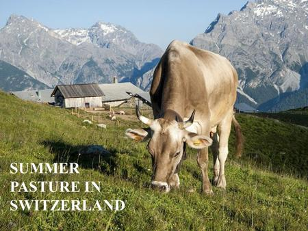 SUMMER PASTURE IN SWITZERLAND. What we are talking about Summer pastures in the mountain areas (Alps and Jura), are between 1000 and 2500 meters about.