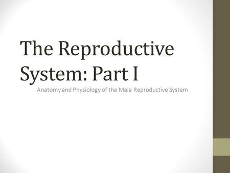 The Reproductive System: Part I Anatomy and Physiology of the Male Reproductive System.