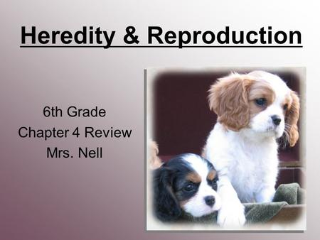 Heredity & Reproduction 6th Grade Chapter 4 Review Mrs. Nell.