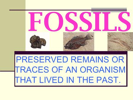 FOSSILS PRESERVED REMAINS OR TRACES OF AN ORGANISM THAT LIVED IN THE PAST.