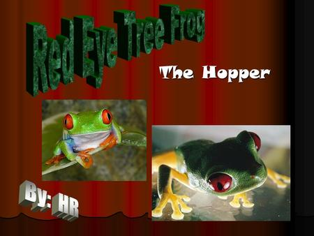 "The Hopper. Species Species of Beira. Species of Beira. They are mammals. They are mammals. They are an arboreal amphibian which means that they are ""tree."