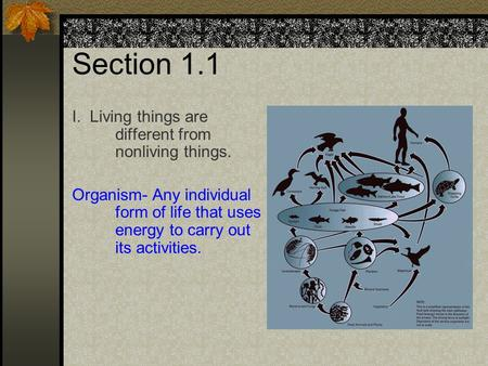 Section 1.1 I. Living things are different from nonliving things. Organism- Any individual form of life that uses energy to carry out its activities.