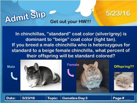 "5/23/16 Date:5/23/16Topic:Genetics Day 3Page # ___ In chinchillas, ""standard"" coat color (silver/grey) is dominant to ""beige"" coat color (light tan). If."