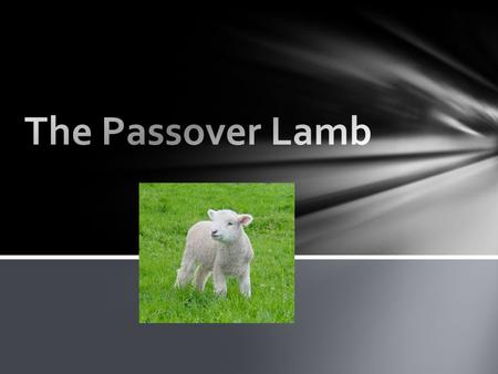 "Why??? Our Lord Jesus Christ. ""He was led as a lamb to the slaughter, and as a sheep before its shearers is silent, so He opened not His mouth."""